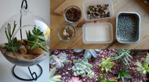 This is how you can build your own terrarium