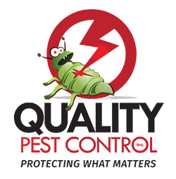 Super Cleaning of Your House Through Pest Control